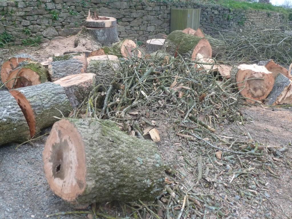 abattage d'un arbre malade
